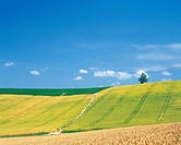 a Rice Field With a Flat Green Land in the Background, Hokkaido Prefecture, Japan