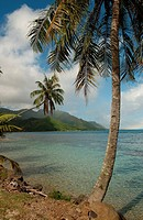 Palm trees on a beach, Moorea, Tahiti