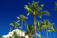 Several Palm Trees and a White_colored House Under a Blue Sky, Low Angle View, Hawaii, USA