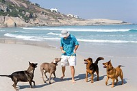 Man playing with dogs on beach, elevated view (thumbnail)