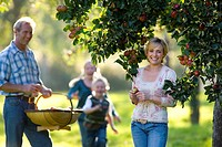 Family of four picking apples in orchard, smiling, portrait