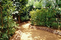 A path lined with coconut shells winds its way through a spice garden.