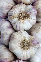 Heads of French garlic, full frame
