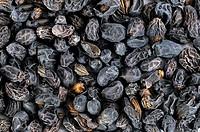 Glossy Privet Fruit, Ligustri lucidi Fructus
