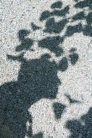 Shadow of tree leaves on gravel