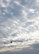 Clouded sky with seagull in distance