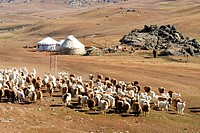 China, Xinjiang, Altay Massif, Kazak nomad camp and herd of sheep