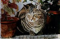 Hosta the Cat 2002 Anthony Butera b.20th C. Monotype