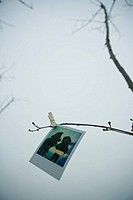 Instant film hanged on branch