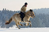 Girl galloping on a Norwegian horse at winter