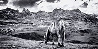 Horse, Pyrenees Mountains, France