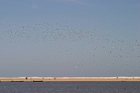 Birds, Ave, Beach, Mostardas, Rio grande do Sul, Brazil