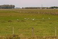 Fences in grassland, Mostardas, Rio grande do Sul, Brazil