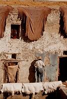 Chouara tannery in Fez, Morocco