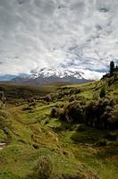 Ecuador - Chimborazo Province. Andean grassland at Mount Chimborazo