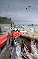Ecuador _ Guayas Province _ Puerto López. Swordfish sold on beach
