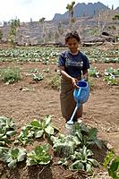 Watering spinach, vegetable and fruit garden, communally farmed, in Kutepe, Oecussi-Ambeno. East Timor