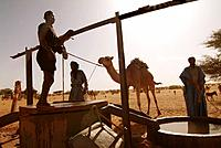Mauritania, nomads and camels at Diawgui well