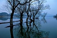 River, tree and boat (thumbnail)
