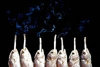 Fish with cigarette