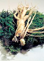 Ginseng