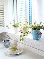 Potted plants on window bay (thumbnail)