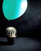Balloon and cactus