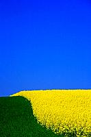 Oilseed rape cultivation in Austria