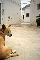 Dog in Rodalquilar, Almeria, Spain