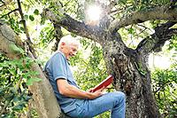 Man reading book in tree