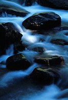 Creek, Olympic National Park, Washington State, USA,