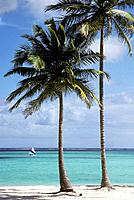 Palm Trees on Beach. Punta Cana, Dominican Republic