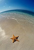 Starfish on Beach. Aruba, Lesser Antilles
