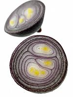 One Red Onion cut in half