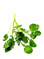 Raw Food, Herbs, Watercress (thumbnail)