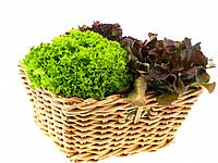 Raw Food, Salads, Lettuce in a basket