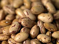 Close up of Borlotti Beans