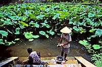 Washing clothes in the pond of Duong Van Nga temple, Hoa Lu, Ninh Binh province, Vietnam
