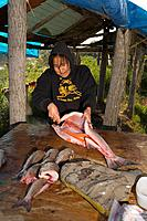 Yupik woman & daughter processing salmon @ fish camp for drying/smoking process Tuluksak WE Alaska