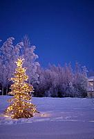 Lighted Christmas Tree Outside Twilight Winter AK