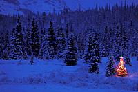 Tree decorated with lights Summit Lake KP AK winter scenic
