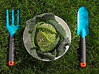 Cabbage in a plate with a gardening fork and a trowel