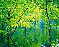 Trees in Water, High Angle View, Pan Focus (thumbnail)
