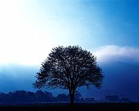 Big Tree, Silhouette, Front View, Pan Focus