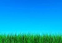 Blue sky over grass