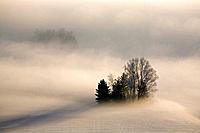 Germany, Bavaria, Murnau, Misty landscape