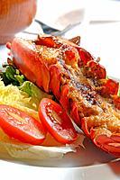 Newberg_style American lobster