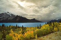 Lake Abraham and fall colours with Mt. Michener in the background, Kootenay Plains Alberta, Canada