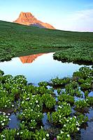 Potosi Peak rising above alpine tundra at sunset and reflecting in tarn surrounded by marsh marigolds, Yankee Boy Basin, Colorado, USA