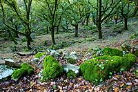 Los Alcornocales Natural Park. Cadiz province, Andalucia, Spain